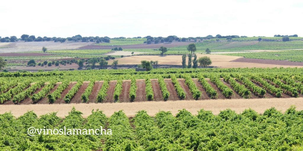 Millones para el Programa de Apoyo al sector vitivinícola