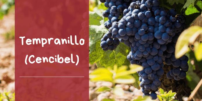características variedad uva tempranillo