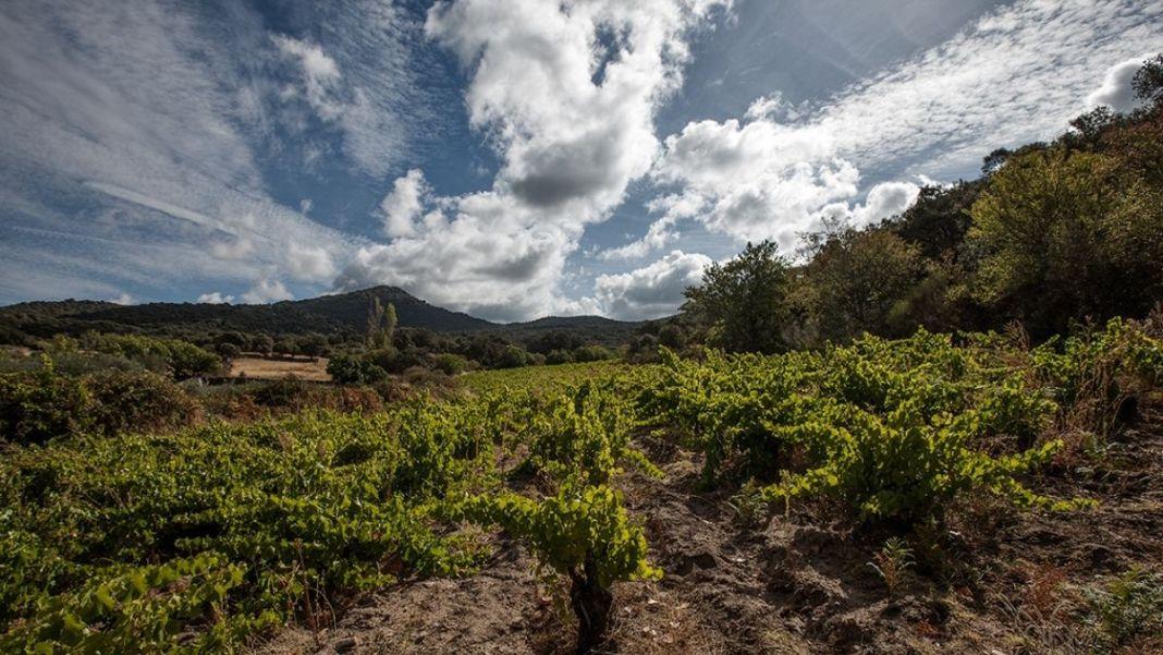 bodegas canopy vinos garnacha