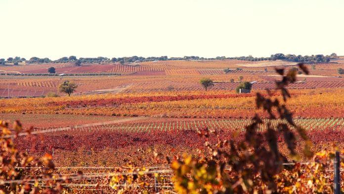 el viñedo en otoño viña en otoño hojas vid
