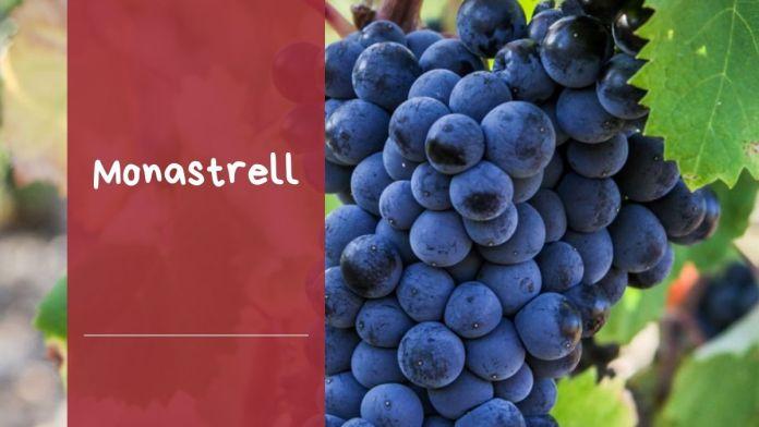 características uva monastrell