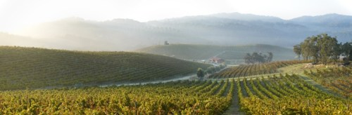 Tablas Creek Vineyards, Paso Robles (winery website)