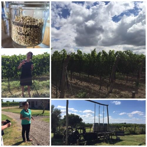Biodynamic Vineyards of Alpamanta