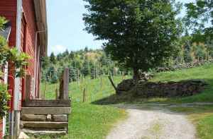 Jones Vineyards