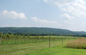 Four Sisters Winery vineyards
