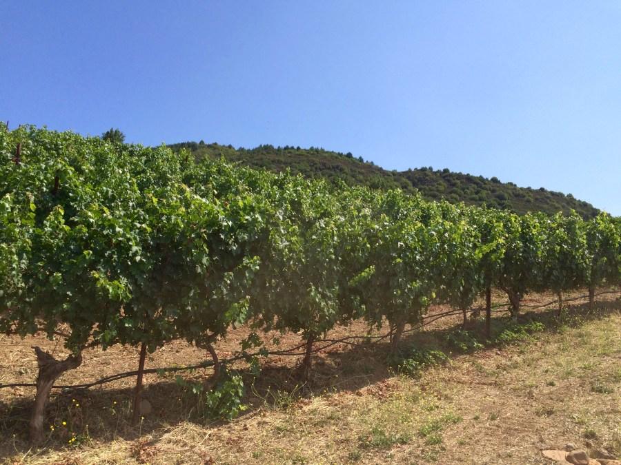 photo of Repris vines