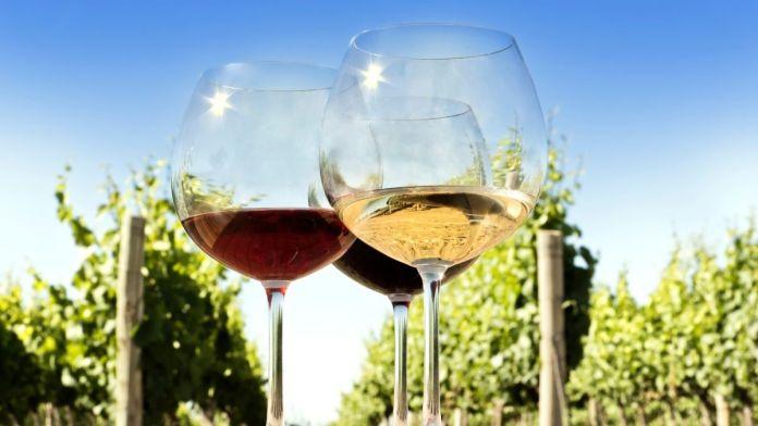 significado de terroir que significa vino