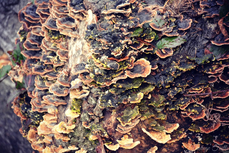 Claremont Fungus