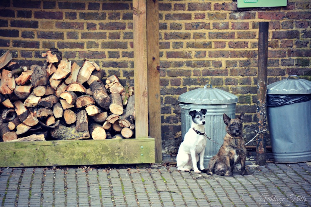 Cute Dogs Morden Hall Park