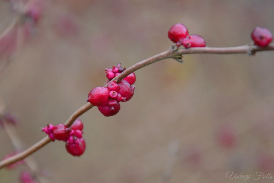 Painshill Berries