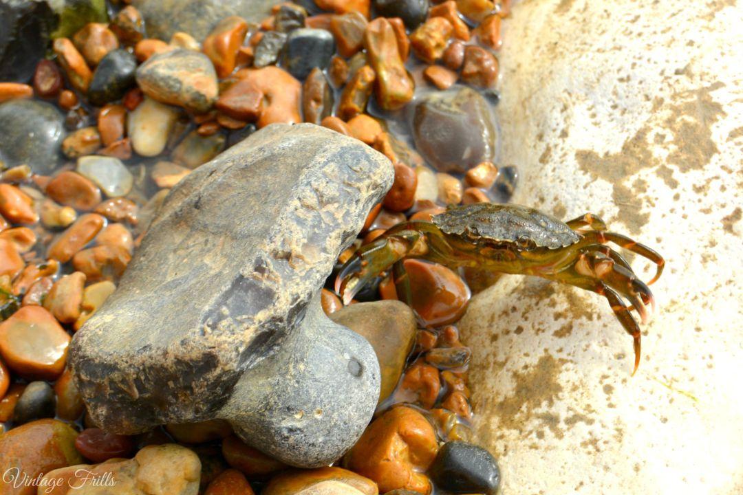 Crab Saltdean