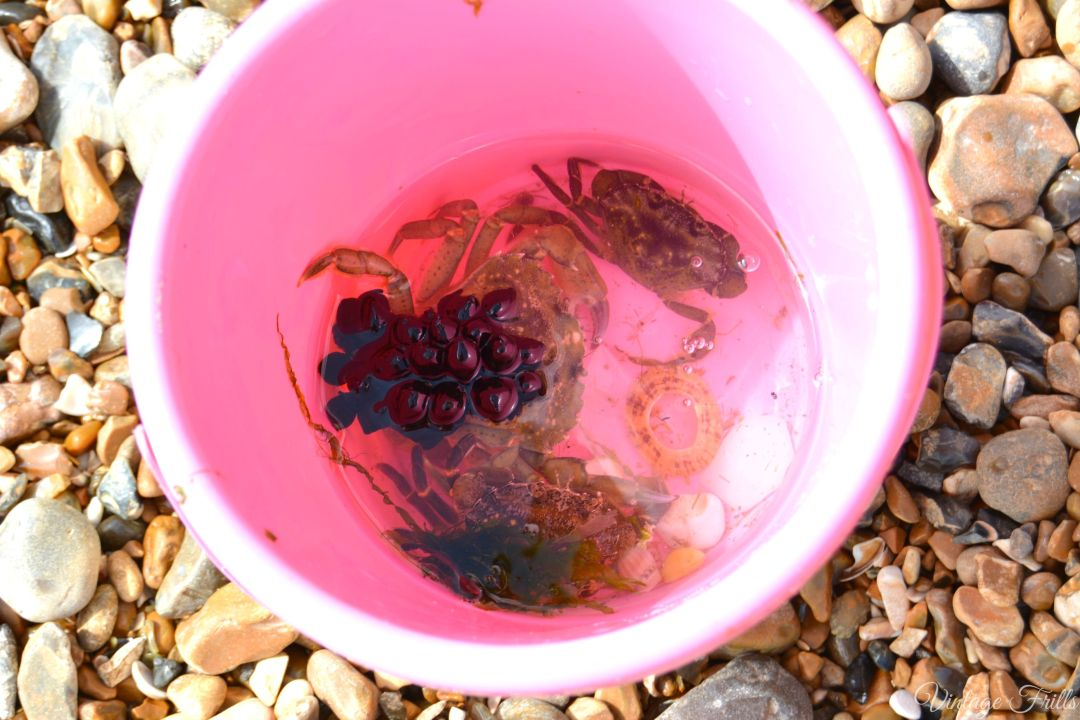 Rockpooling Crabs