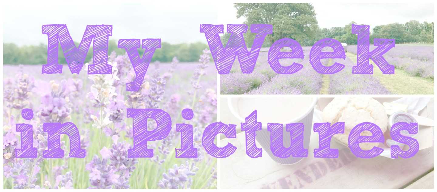 My Week In Pictures – 26th June – 2nd July