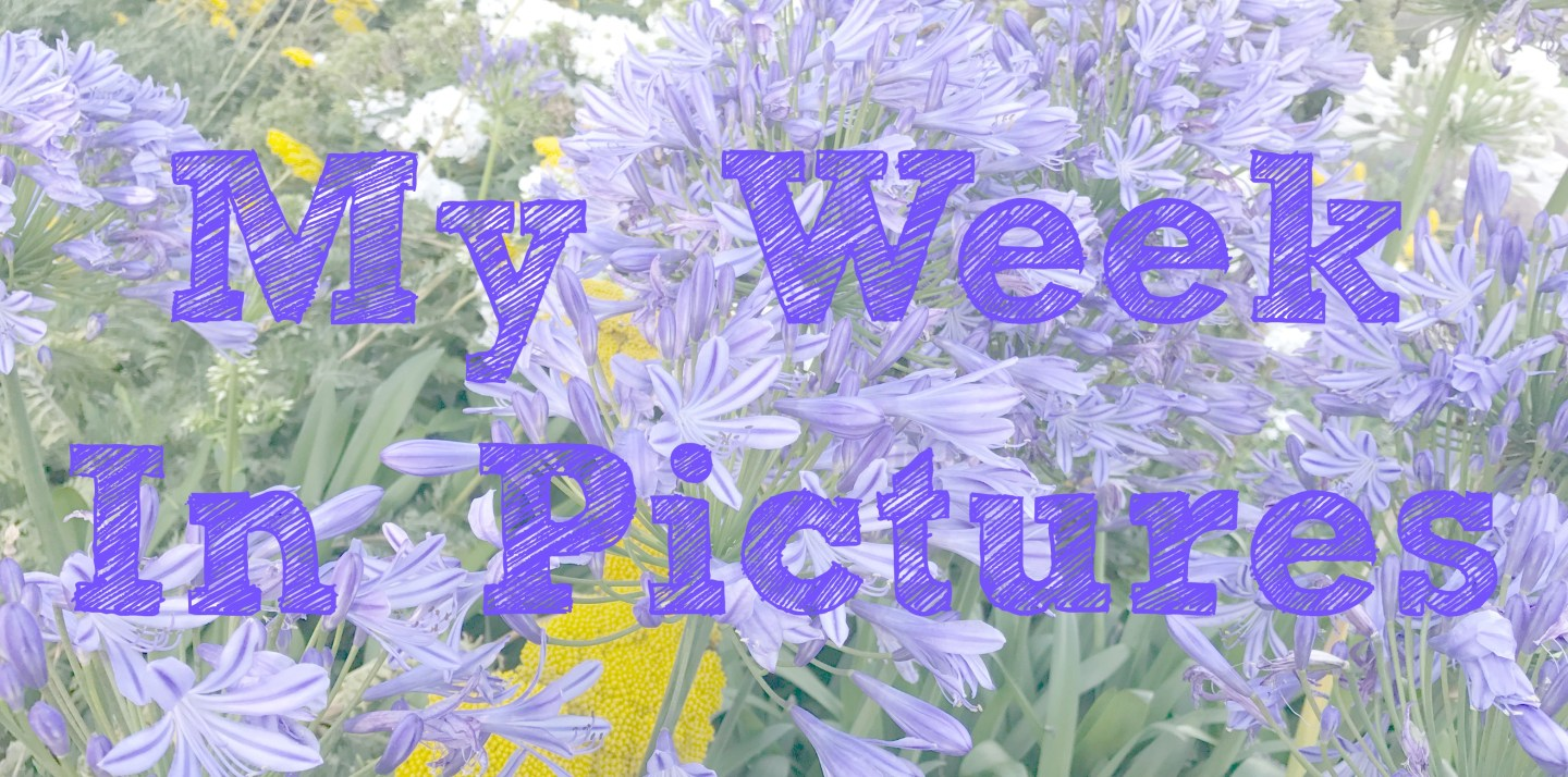 My Week in Pictures 31st July – 6th August