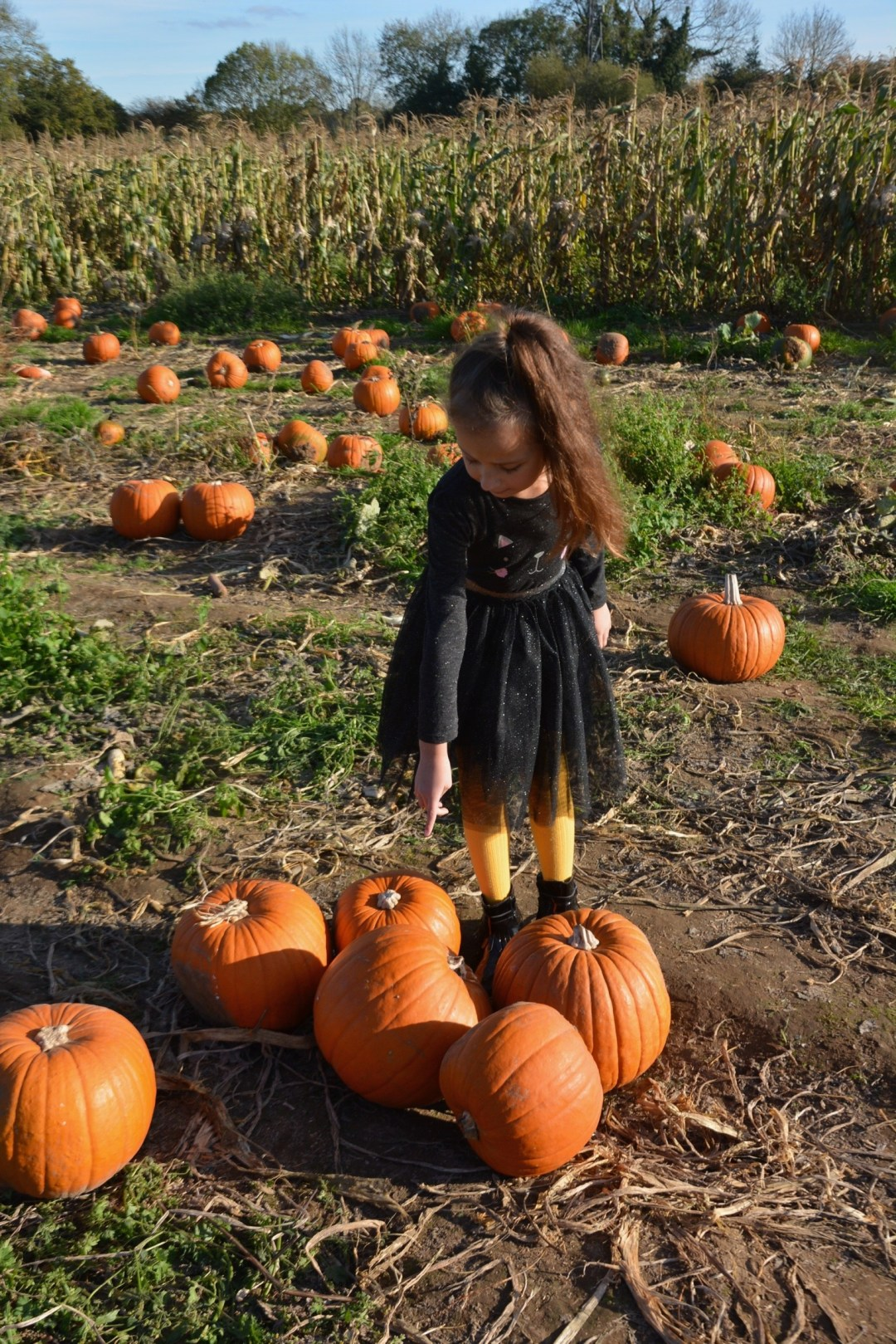 Autumn is Here! - 10 Things to do in October