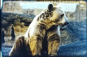 A still image from a vintage home movie shot in the early 1960s at London Zoo