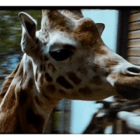 A Film of Dudley Zoo from the 1960s