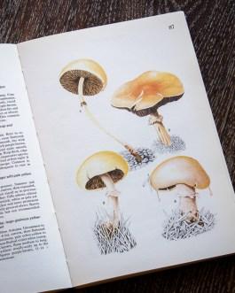 Грибы. Иллюстрация из книги 1979 года. Артикул: mat016