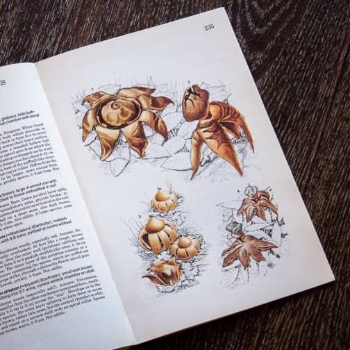 Грибы. Иллюстрация из книги 1979 года. Артикул: mat087