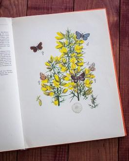 Бабочки. Иллюстрация из книги 1968 года. Артикул: tcbbic_pl033