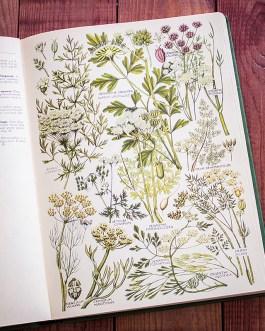 Растения Британии. Иллюстрация из книги 1969 года. Артикул: tcbfic_pl039