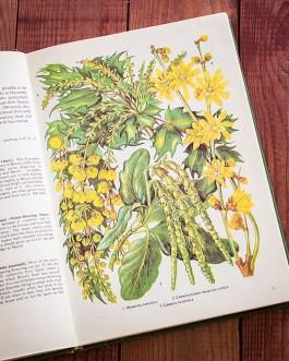 Садовые растения. Иллюстрация из книги 1960 года. Артикул: tibogf001