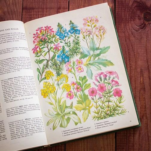 Садовые растения. Иллюстрация из книги 1960 года. Артикул: tibogf021