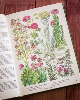 Садовые растения. Иллюстрация из книги 1960 года. Артикул: tibogf022