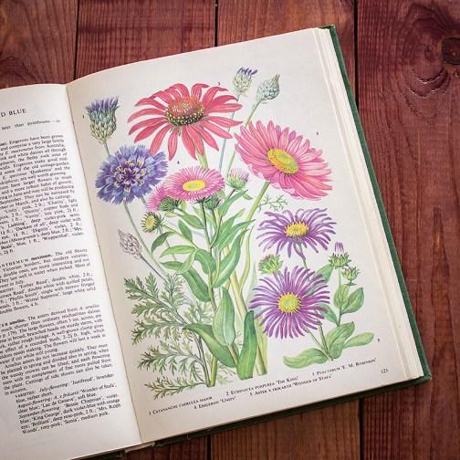 Садовые растения. Иллюстрация из книги 1960 года. Артикул: tibogf062