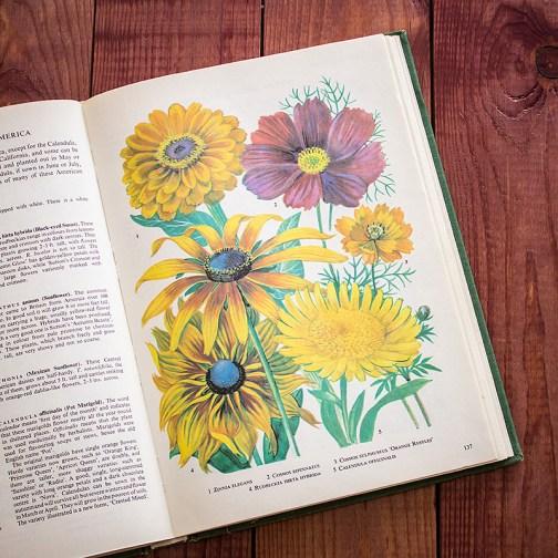 Садовые растения. Иллюстрация из книги 1960 года. Артикул: tibogf069