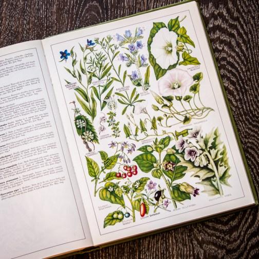 Растения Британии. Иллюстрация из книги 1982 года. Артикул: tncbf061
