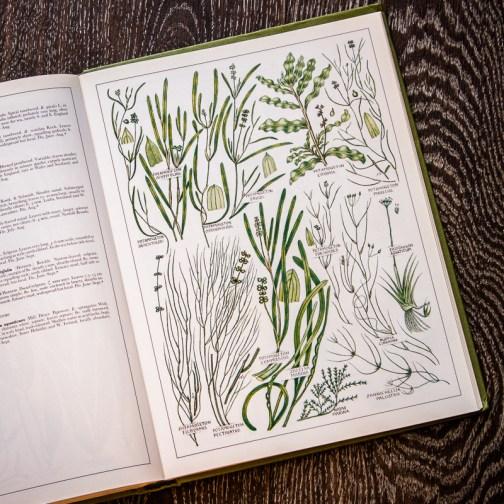 Растения Британии. Иллюстрация из книги 1982 года. Артикул: tncbf090