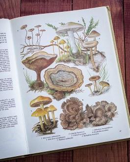 Грибы. Иллюстрация из книги 1979 года. Артикул: tobfp024