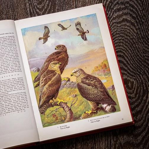 Птицы. Иллюстрация из книги 1973 года. Артикул: tobob020
