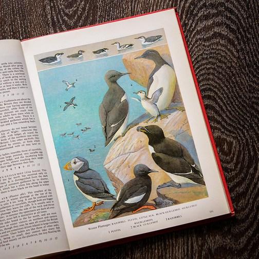 Птицы. Иллюстрация из книги 1973 года. Артикул: tobob051