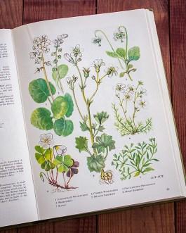 Полевые цветы. Иллюстрация из книги 1973 года. Артикул: tobowf042