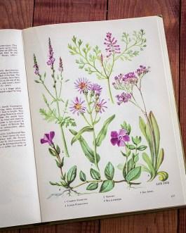 Полевые цветы. Иллюстрация из книги 1973 года. Артикул: tobowf068