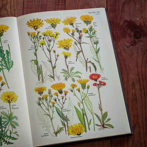 Цветы. Иллюстрация из книги 1977 года. Артикул: twfobane_pl056