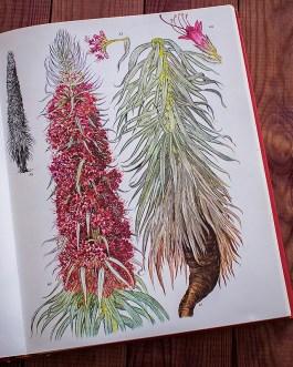 Дикие цветы. Иллюстрация из книги 1970 года. Артикул: wfw_pl044