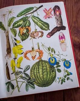 Дикие цветы. Иллюстрация из книги 1970 года. Артикул: wfw_pl053