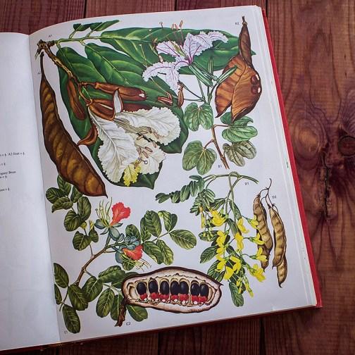 Дикие цветы. Иллюстрация из книги 1970 года. Артикул: wfw_pl054