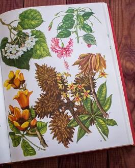 Дикие цветы. Иллюстрация из книги 1970 года. Артикул: wfw_pl057