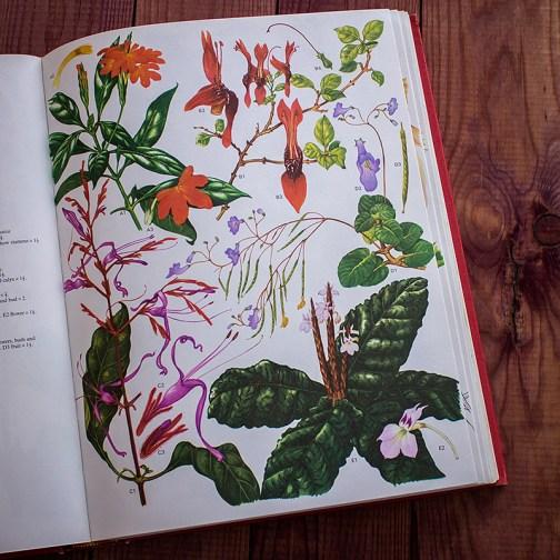 Дикие цветы. Иллюстрация из книги 1970 года. Артикул: wfw_pl064
