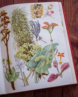 Дикие цветы. Иллюстрация из книги 1970 года. Артикул: wfw_pl070