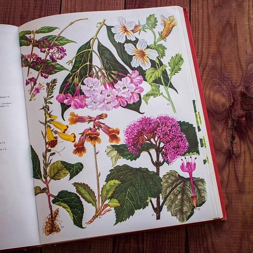 Дикие цветы. Иллюстрация из книги 1970 года. Артикул: wfw_pl104