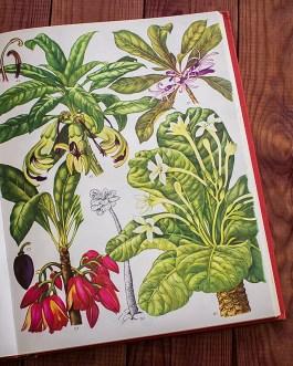 Дикие цветы. Иллюстрация из книги 1970 года. Артикул: wfw_pl146
