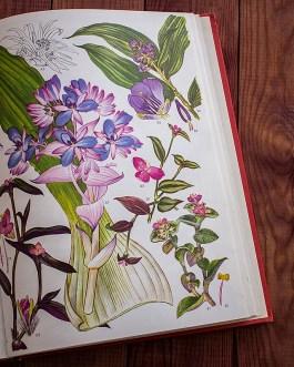 Дикие цветы. Иллюстрация из книги 1970 года. Артикул: wfw_pl187