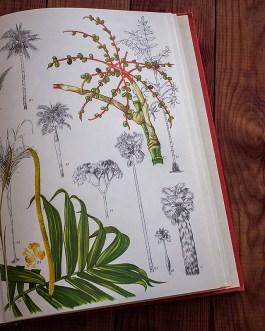 Дикие цветы. Иллюстрация из книги 1970 года. Артикул: wfw_pl191