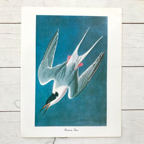 Иллюстрация с Птицами 1979 года.