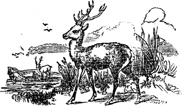 vgosn_vintage_deer_clip_art_illustration